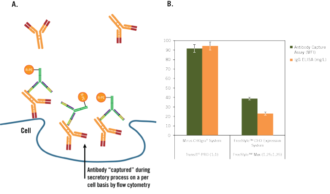 More Antibody is Secreted on Per-cell Basis with the CHOgro Expression System