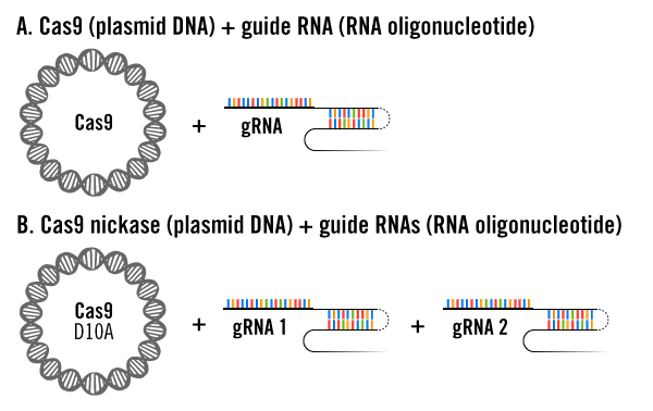 CRISPR Plasmid and gRNA Delivery Approaches