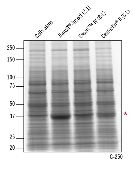 Superior Recombinant Protein Expression in High Five Cells Using TransIT-Insect