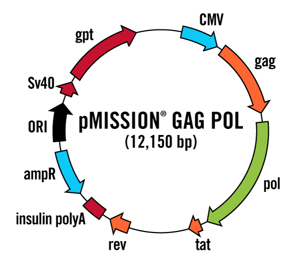 pMISSION GAG POL Vector Map