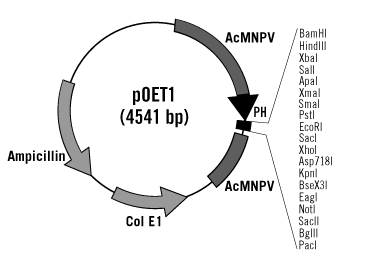 pOET1 Transfer Plasmid Map