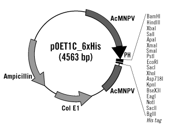 pOET1C_6XHis Transfer Plasmid Map
