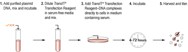 TransIT Transfection Reagents are Ideal for Virus Production