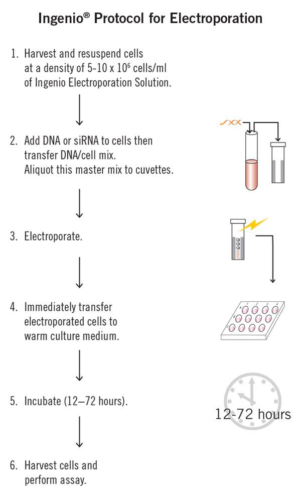 bio rad gene pulser manual
